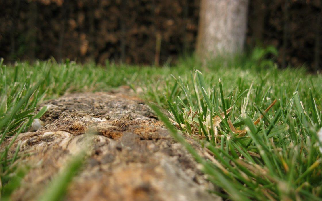 Grass wide wallpaper