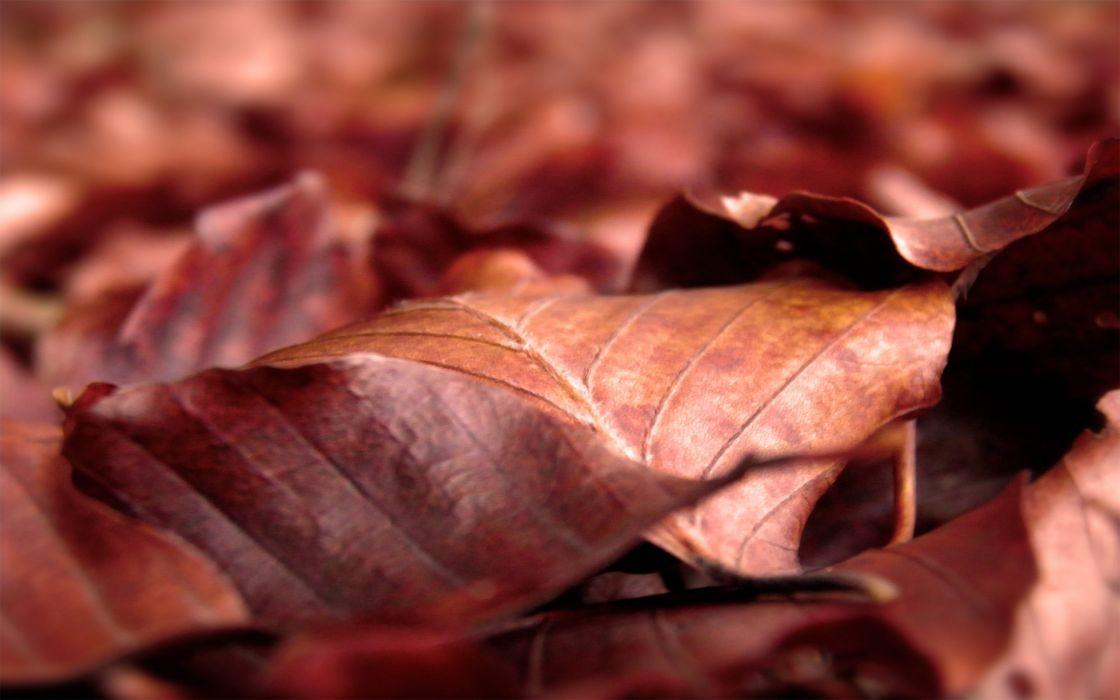 Dry brown leaf wallpaper