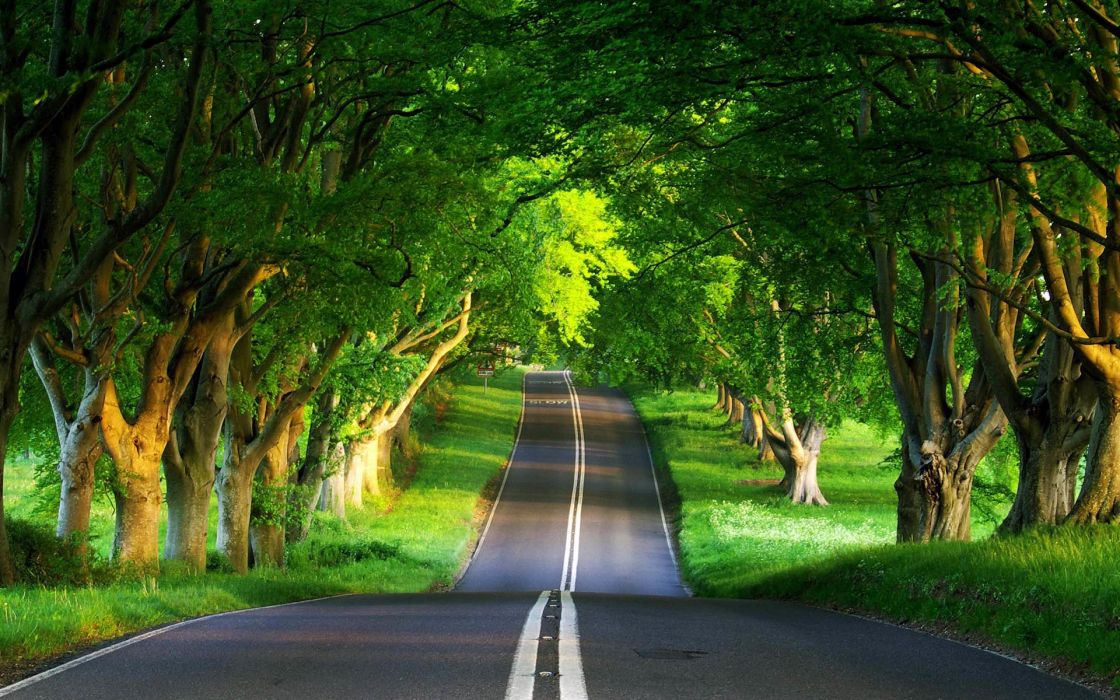 Green road wallpaper