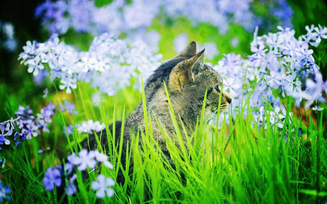 Cat in garden wallpaper