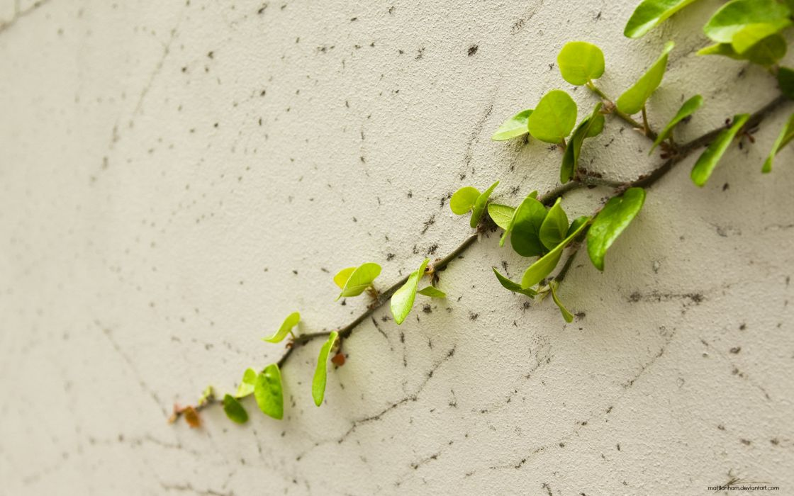 Plant on wall wallpaper