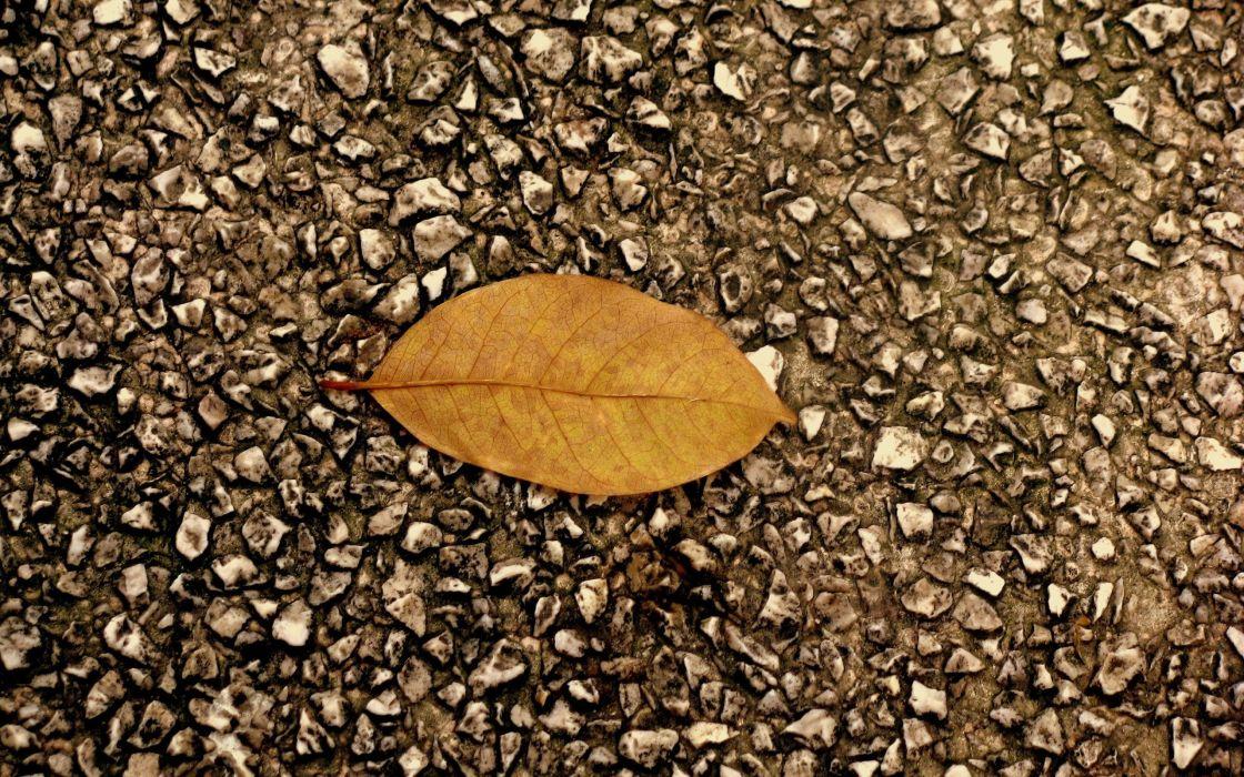 One leaf wallpaper