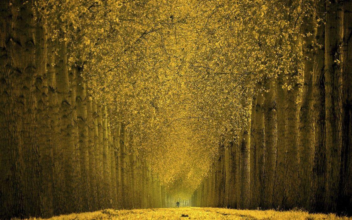Beautiful autumn trees wallpaper