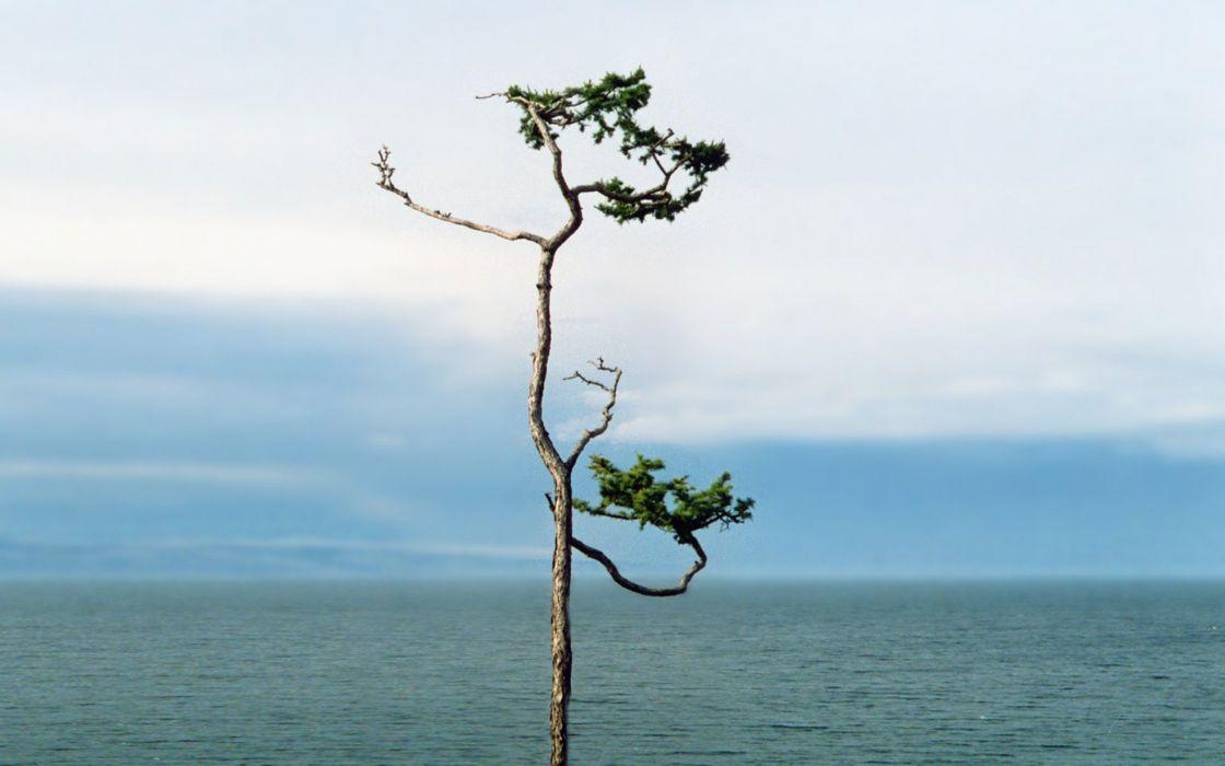 Sea plant wallpaper