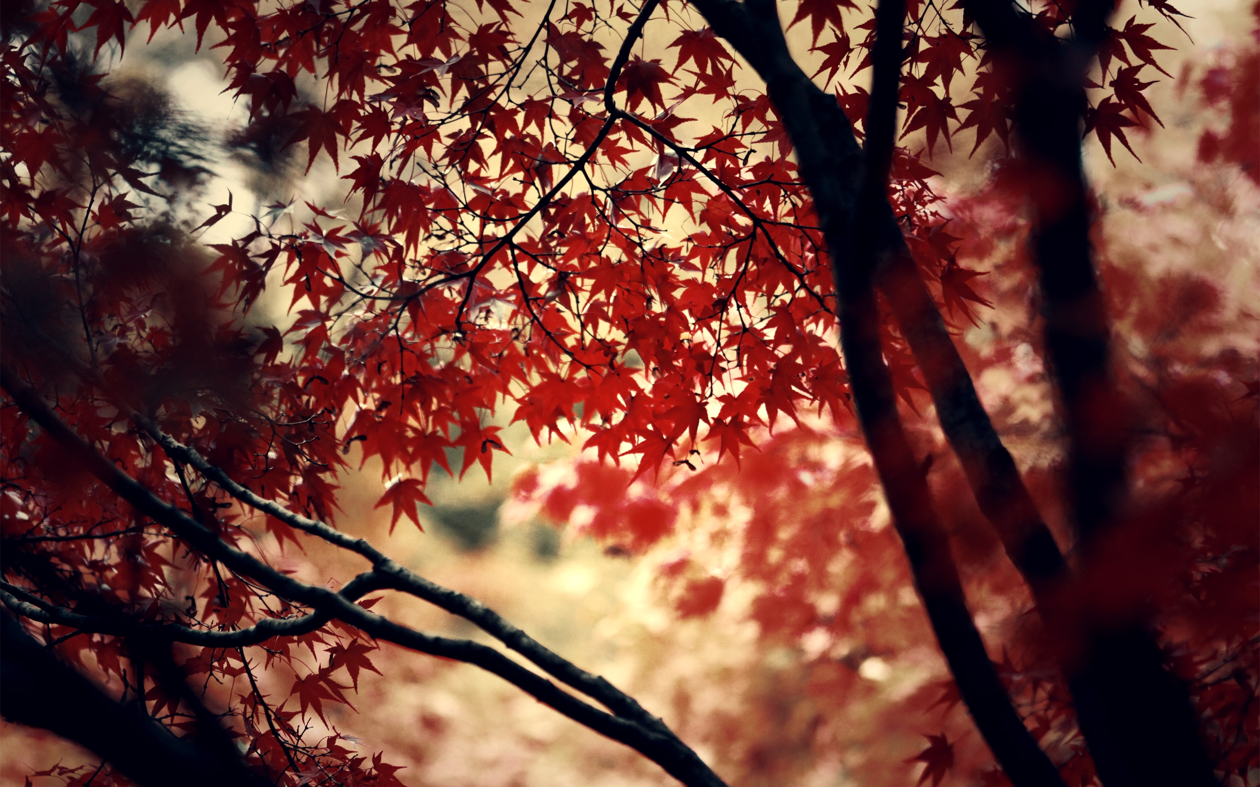autumn wood forest photography deviantart maple leaf maple syrup maple key wallpaper 2560x1600. Black Bedroom Furniture Sets. Home Design Ideas