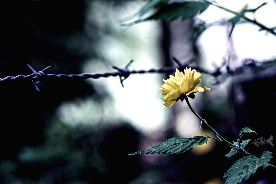 Yellow flower and fence other wallpaper