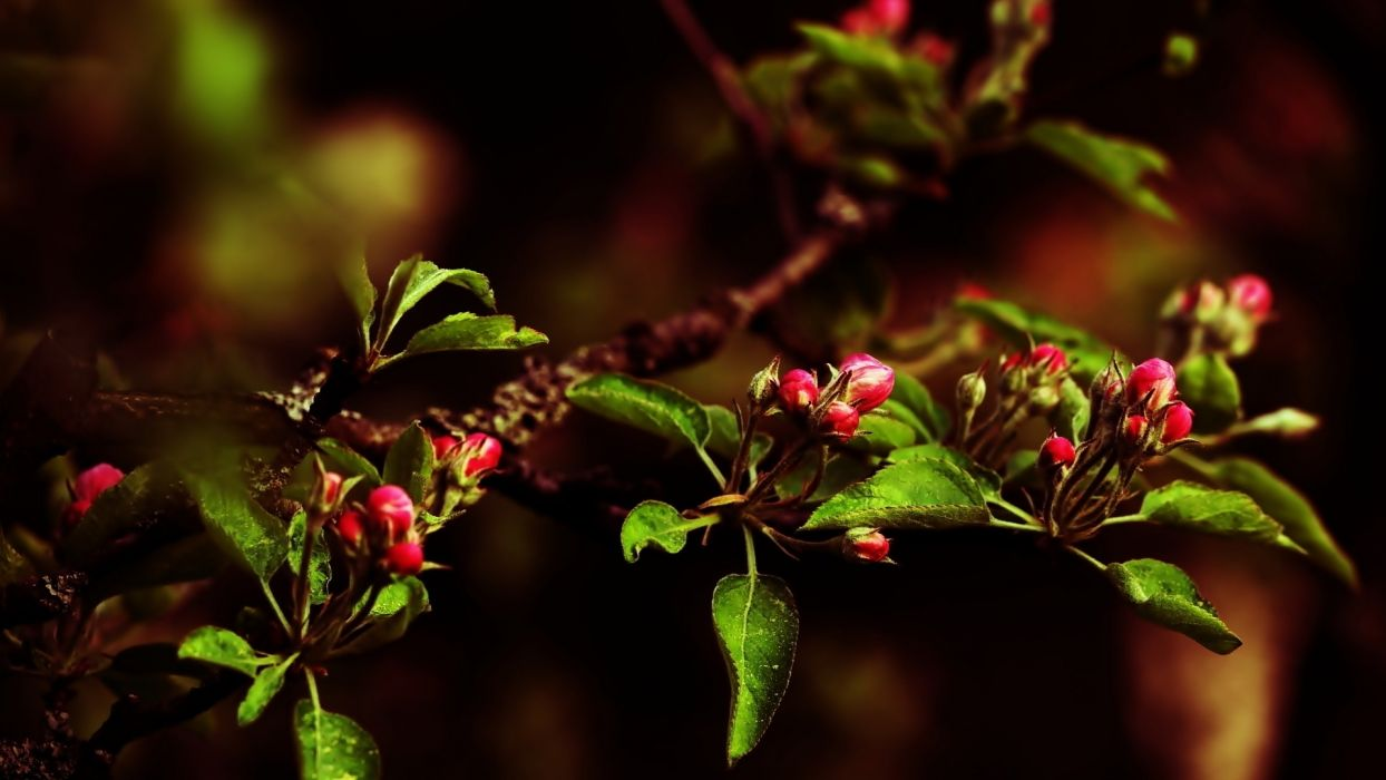 Little red flowers nature blossoms wallpaper
