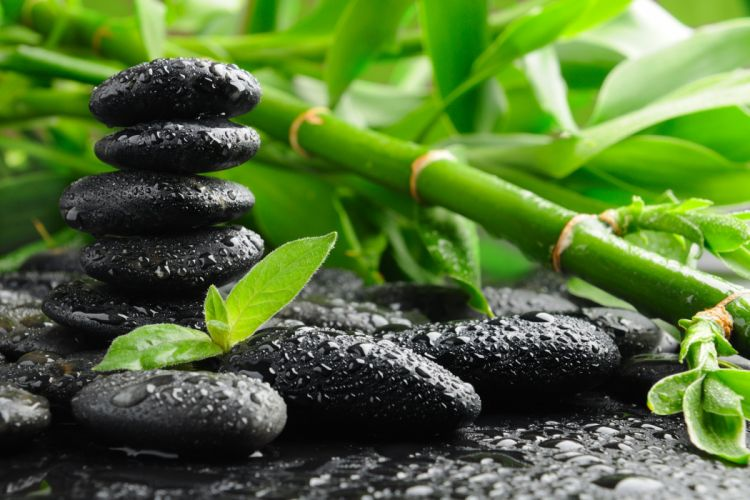 Green bamboo and black stones other wallpaper
