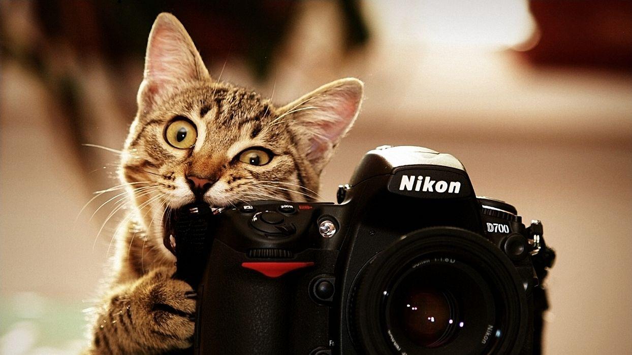 Cats bite funny cameras nikon kittens photo camera biting wallpaper