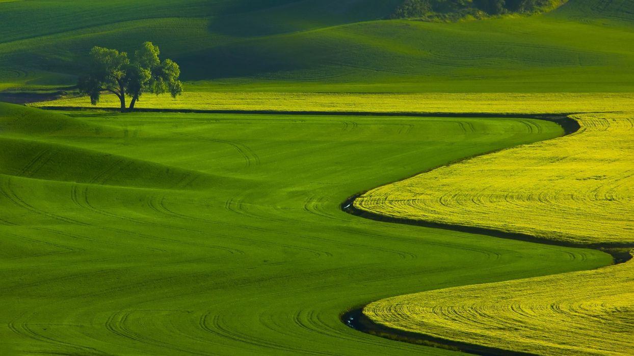 Green fields nature landscape wallpaper