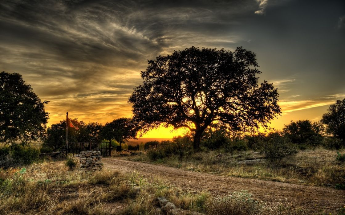 Landscapes nature trees hdr photography wallpaper
