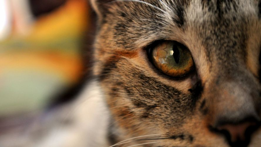 Eyes cats animals photography focus wallpaper