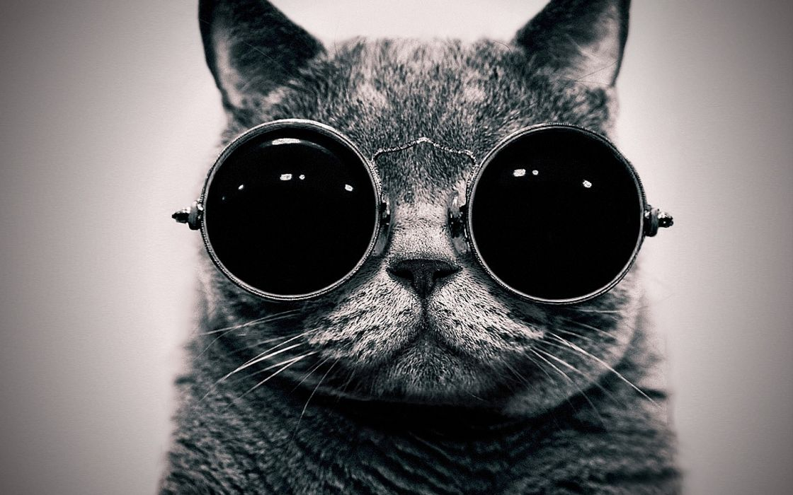 Cats animals glasses sunglasses hippie schrodingers cat monochrome schrodinger steam punk wallpaper