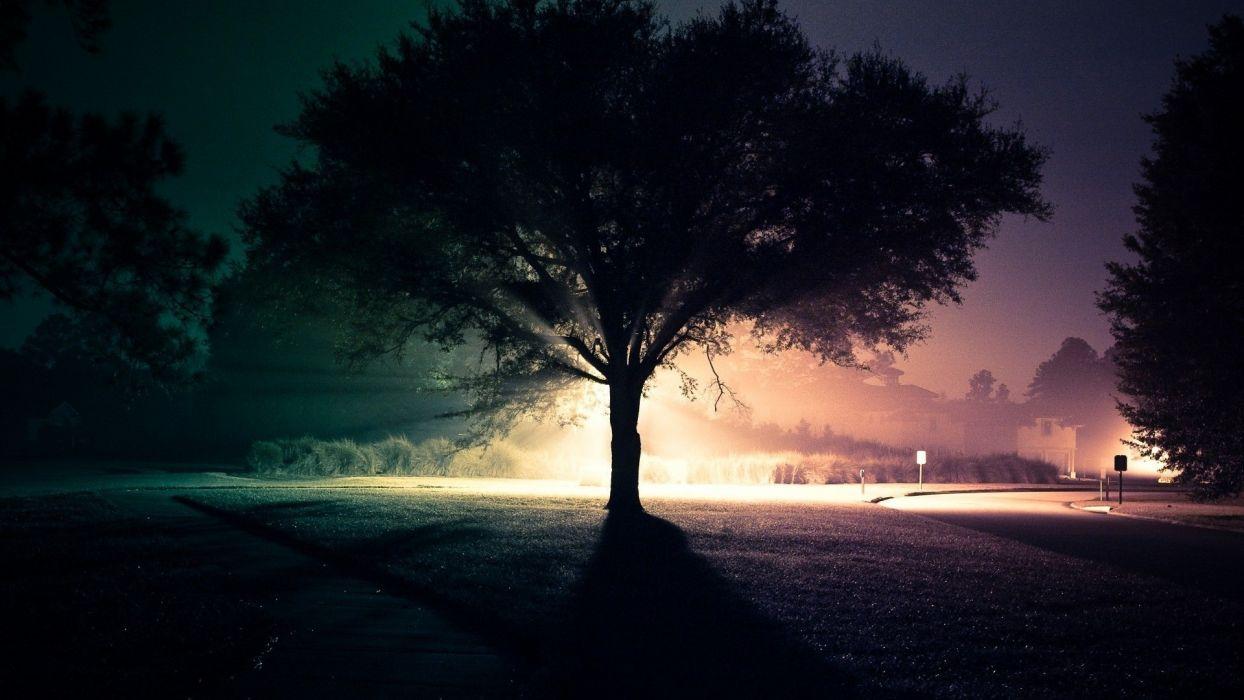 Light landscapes trees night roads wallpaper