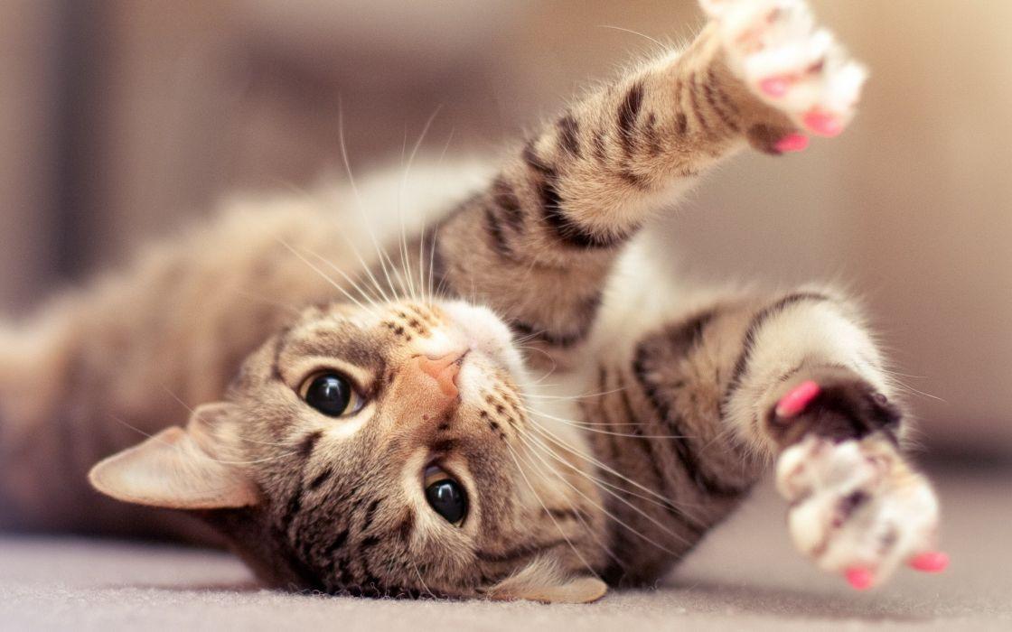 Cats animals kittens pets wallpaper