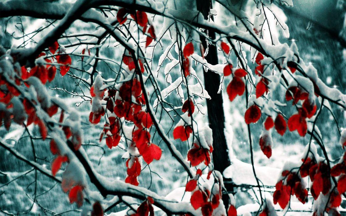 Snow leaves wallpaper