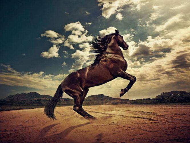 Rising horse wallpaper