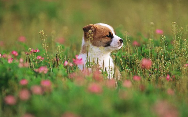 Garden adventure of the puppy wallpaper