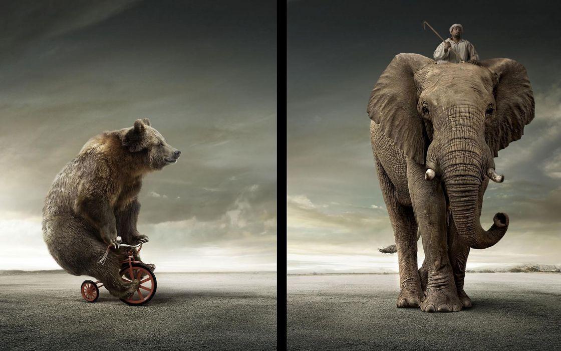 Bear vs elephant wallpaper