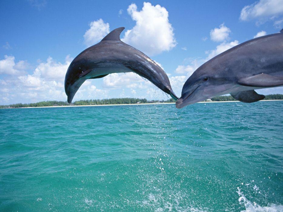 Dolphins underwater wallpaper