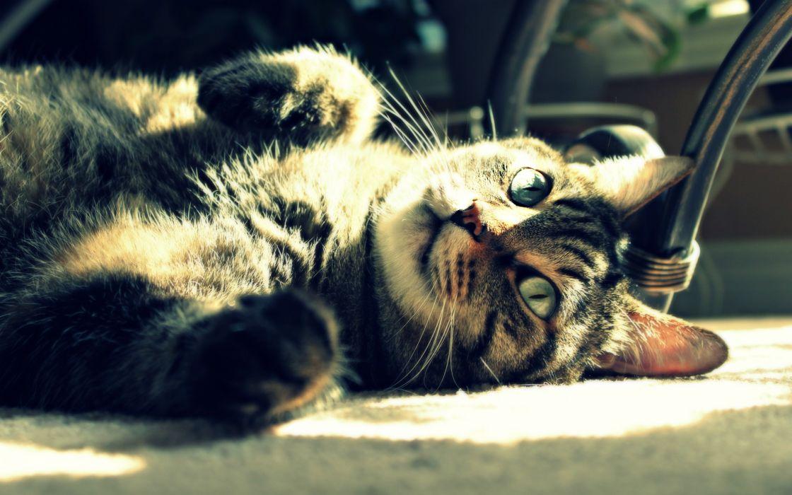 Cats animals depth of field wallpaper