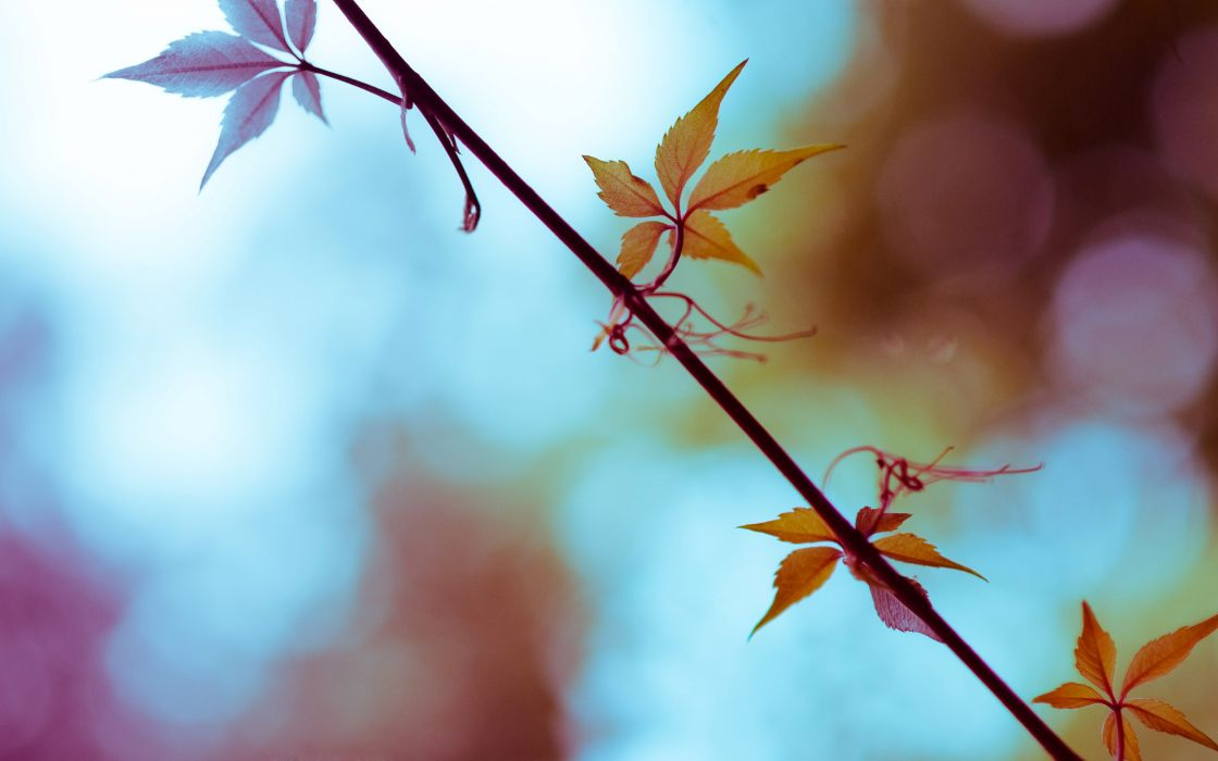 Autumn leaves depth of field wallpaper