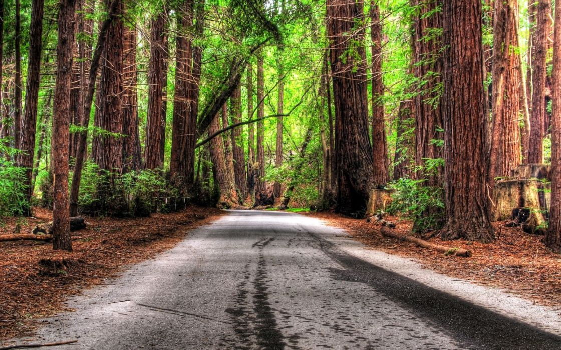 Trees forest roads hdr photography wallpaper