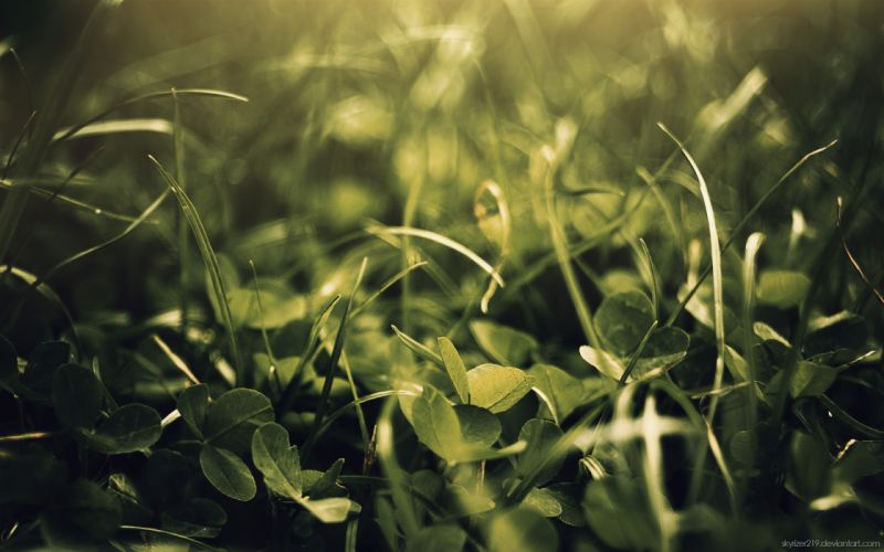 Green nature leaves grass plants macro wallpaper