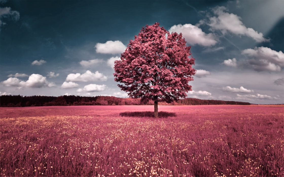 Clouds landscapes trees flowers pink grass fields hills skyscapes wallpaper