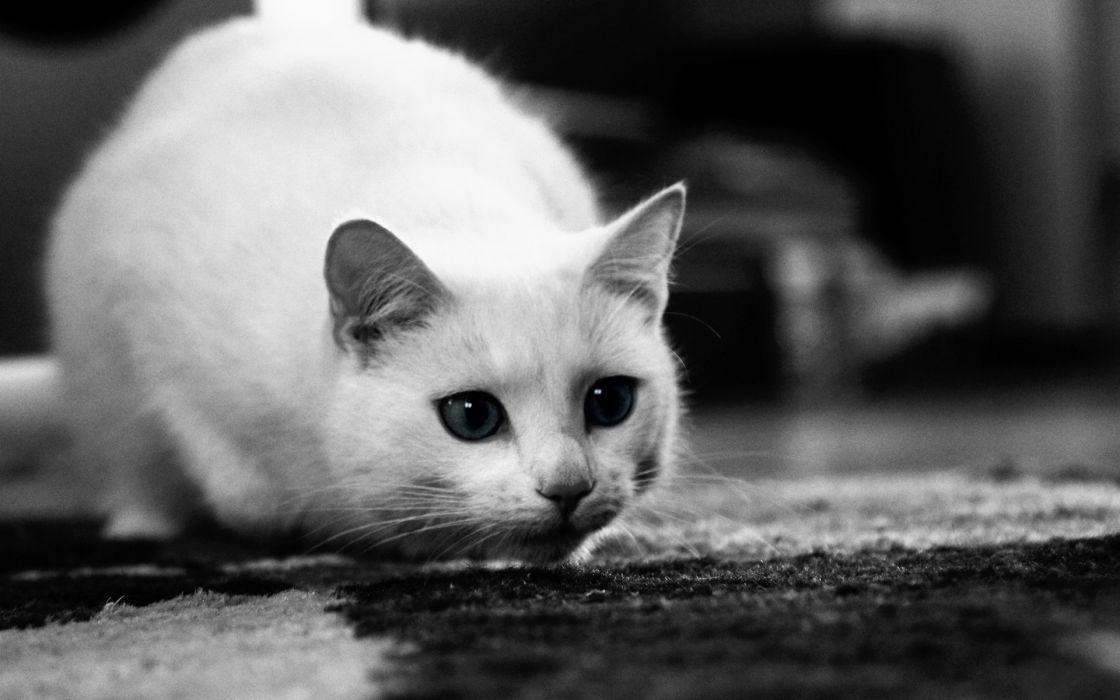 Cats animals grayscale monochrome wallpaper