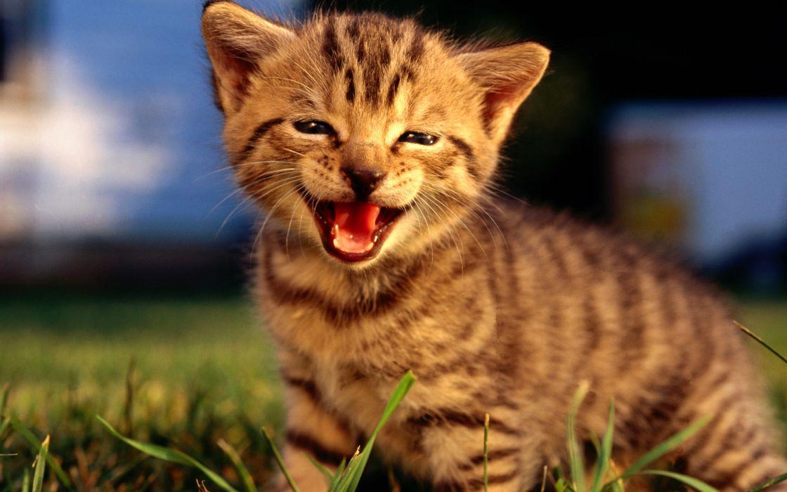 Cats animals tongue kittens wallpaper