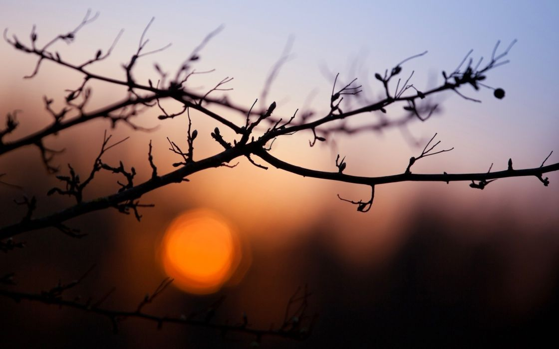 Nature evening branches wallpaper