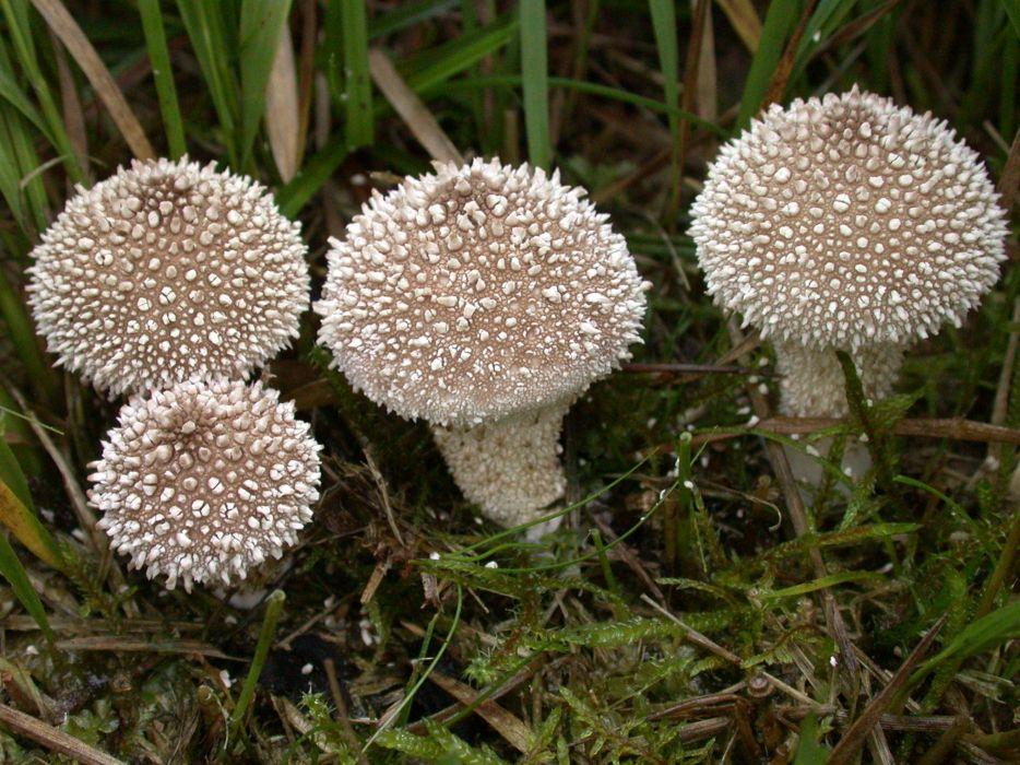 Nature mushrooms wallpaper