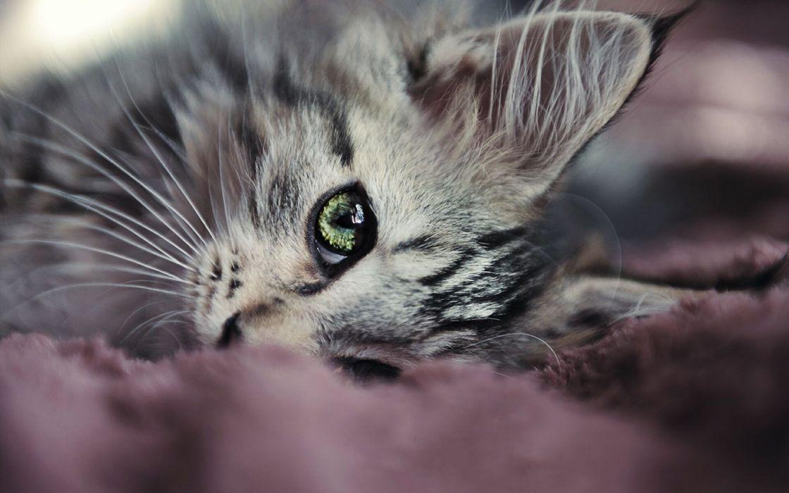 Nature cats animals macro kittens pets wallpaper