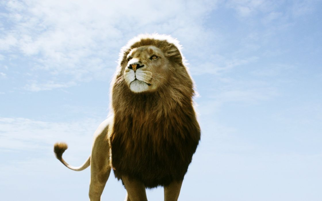 Dawn animals lions skyscapes chronicles of narnia wallpaper