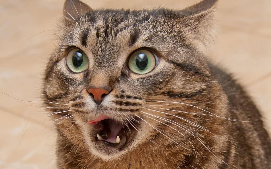 Close-up eyes cats animals macro wallpaper