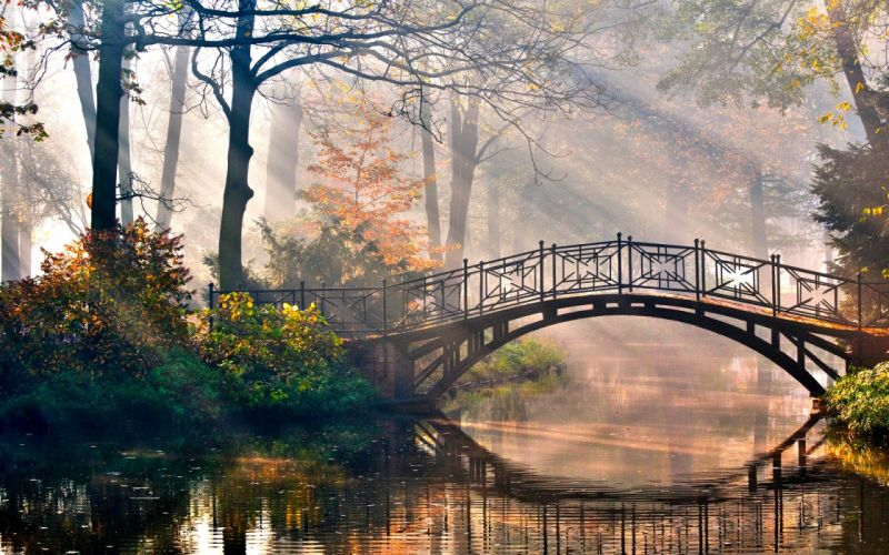 Water landscapes nature trees forest bridges sunlight scenic morning rivers wallpaper