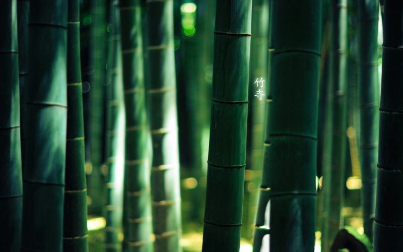Green nature forest bamboo depth of field wallpaper