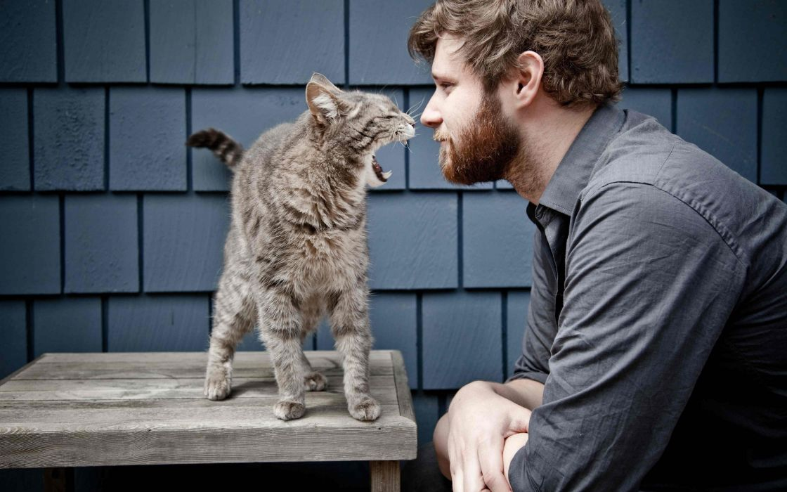 Cats animals men beard wallpaper
