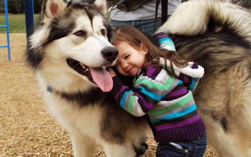 Children dogs alaskan malamute wallpaper