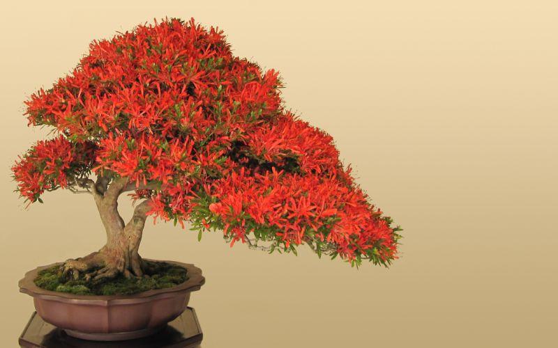 Japan bonsai wallpaper