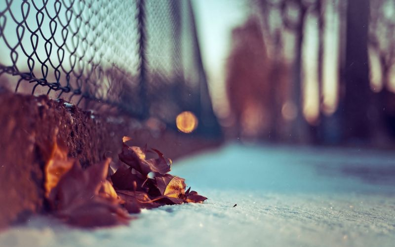 Winter macro chain link fence fallen leaves wallpaper
