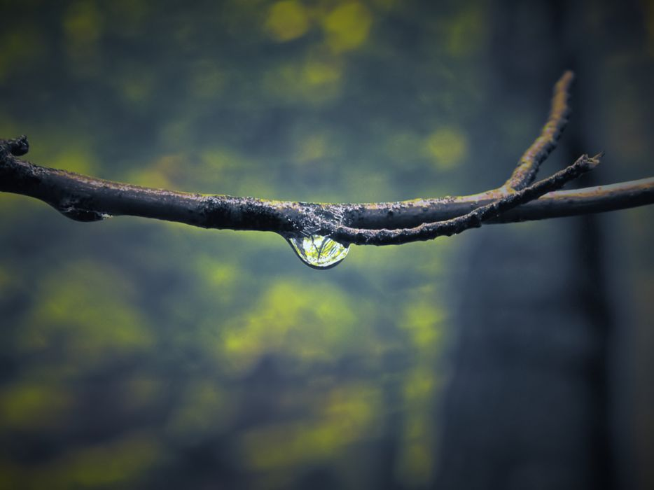 Water nature forest water drops macro wallpaper