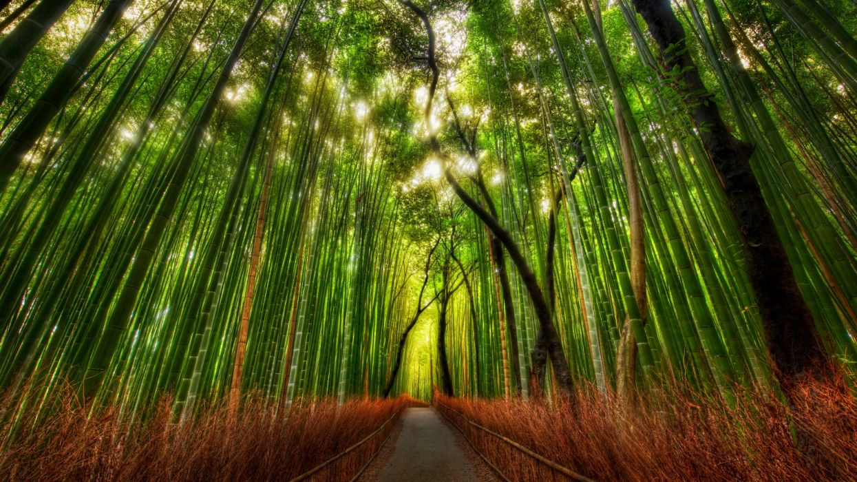 Forest bamboo path trey ratcliff wallpaper