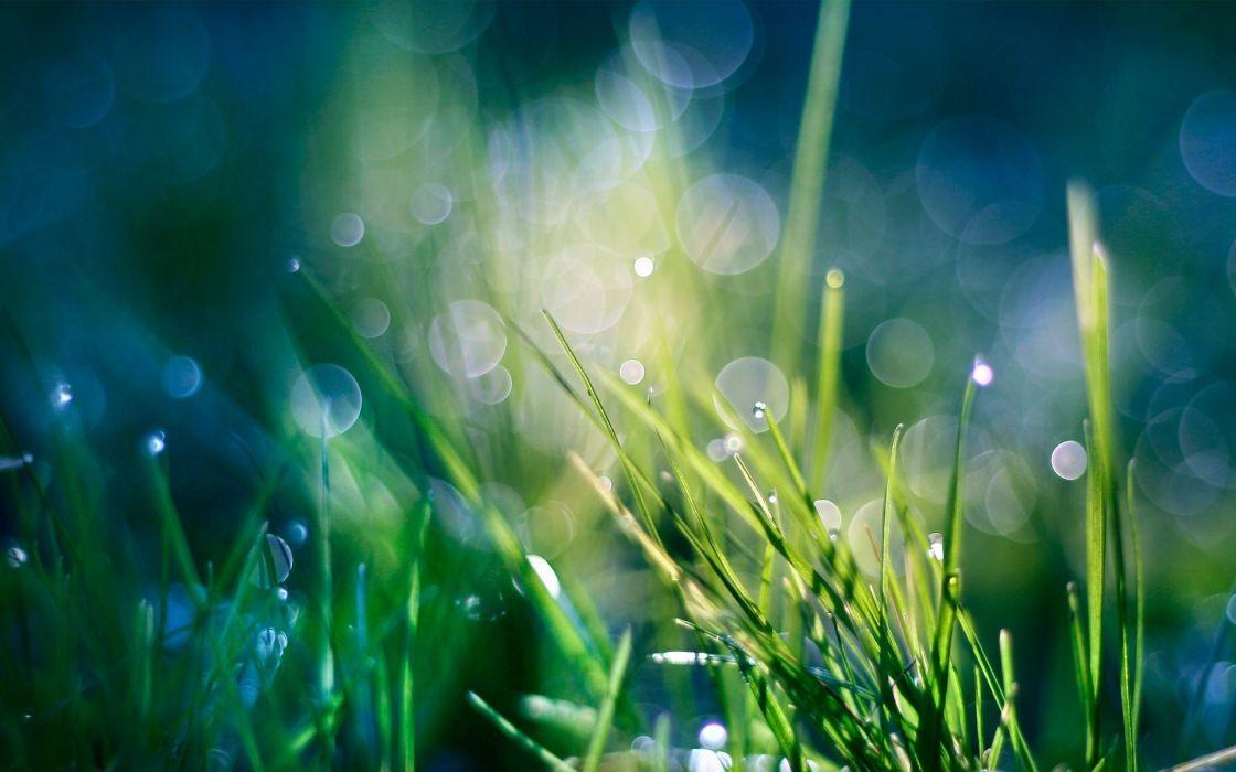 Green nature grass heaven bokeh water drops macro wallpaper