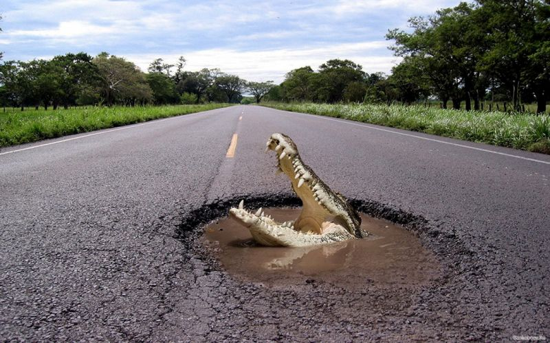 Hole pot roads crocodiles wallpaper