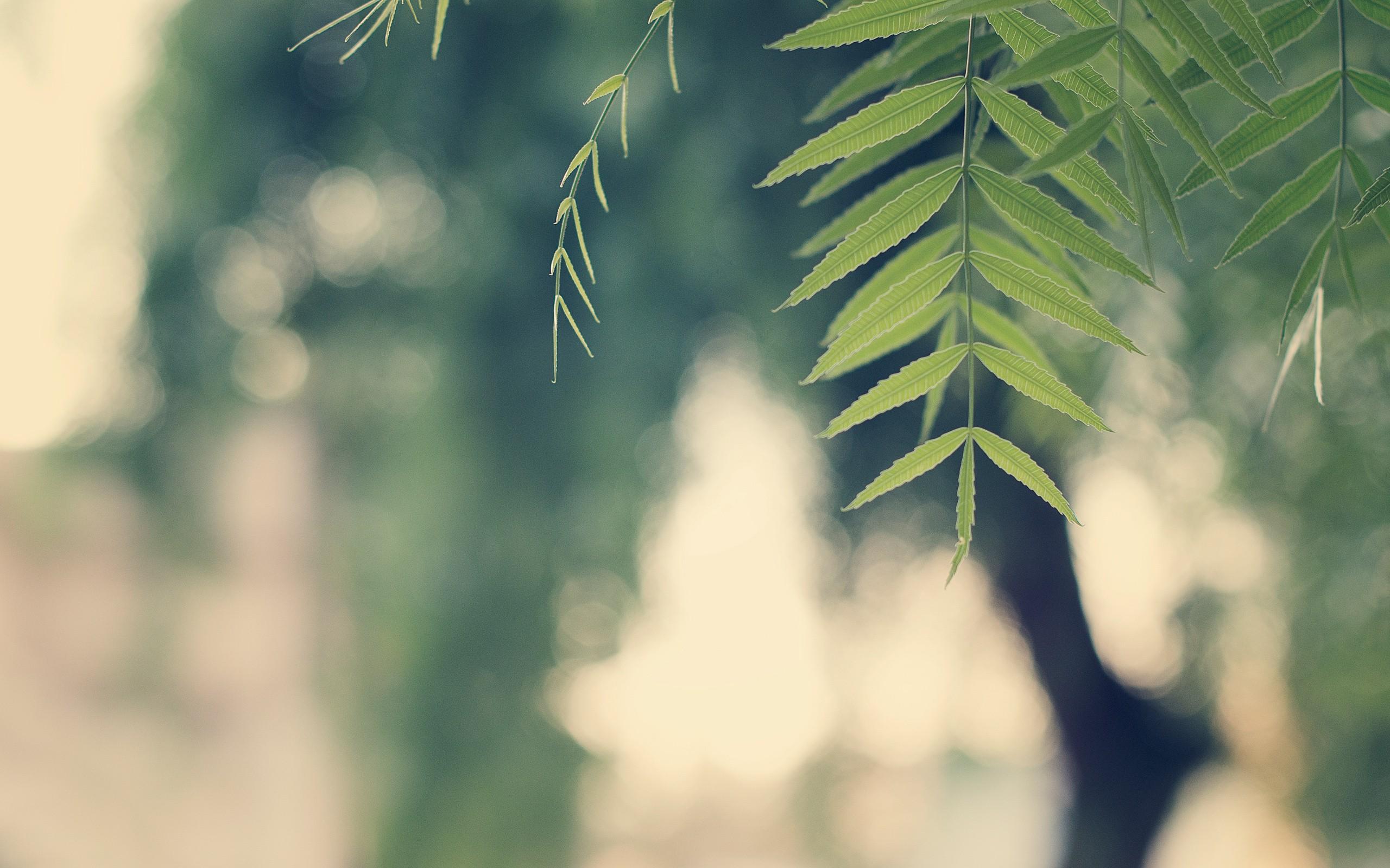 Nature vintage leaves wallpaper | 2560x1600 | 8269 ... Vintage Nature Tumblr Backgrounds