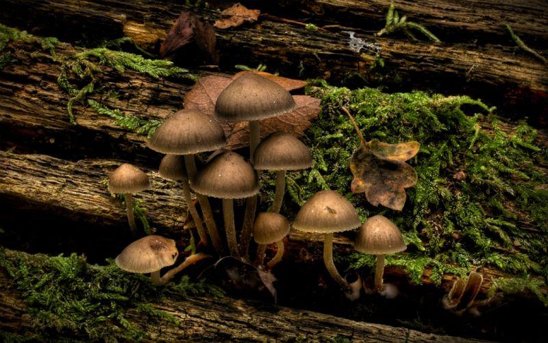 Nature mushrooms infected mushroom wallpaper