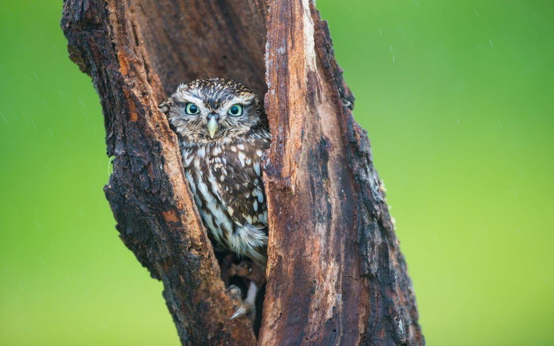 Trees birds owls wallpaper