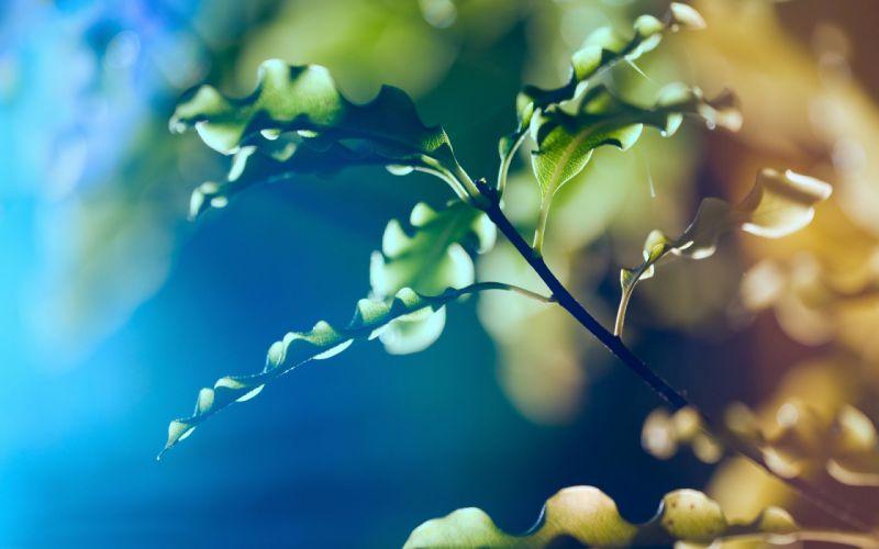 Leaves plants wallpaper